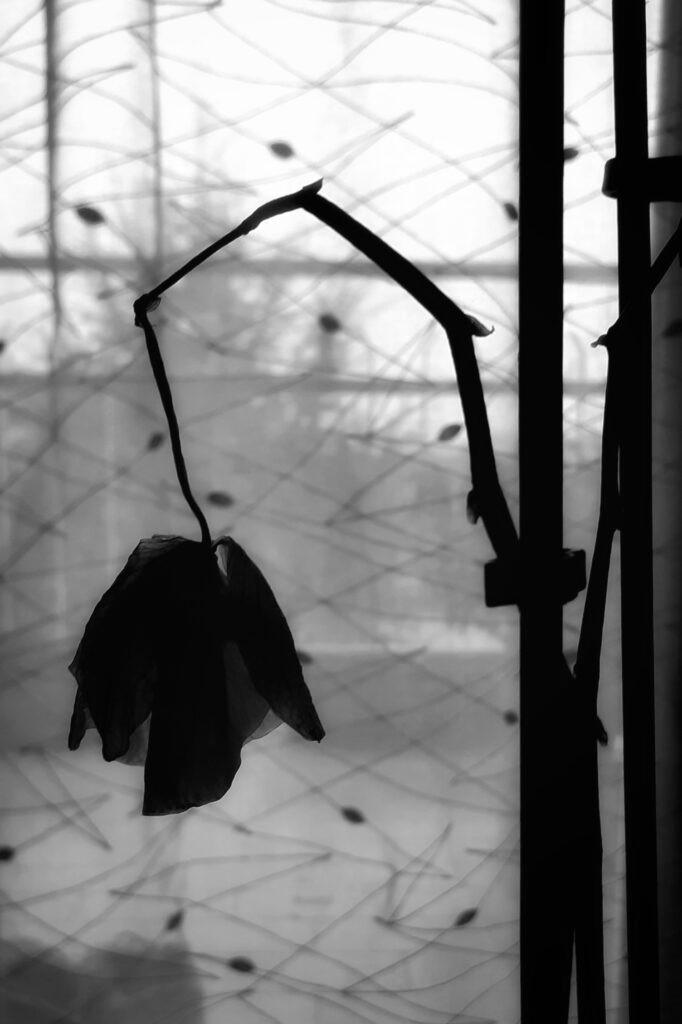 """Fotografia di Manuel Monfredini per l'articolo """"Nessun superstite nel mondo nuovo"""" di Alice dusso"""