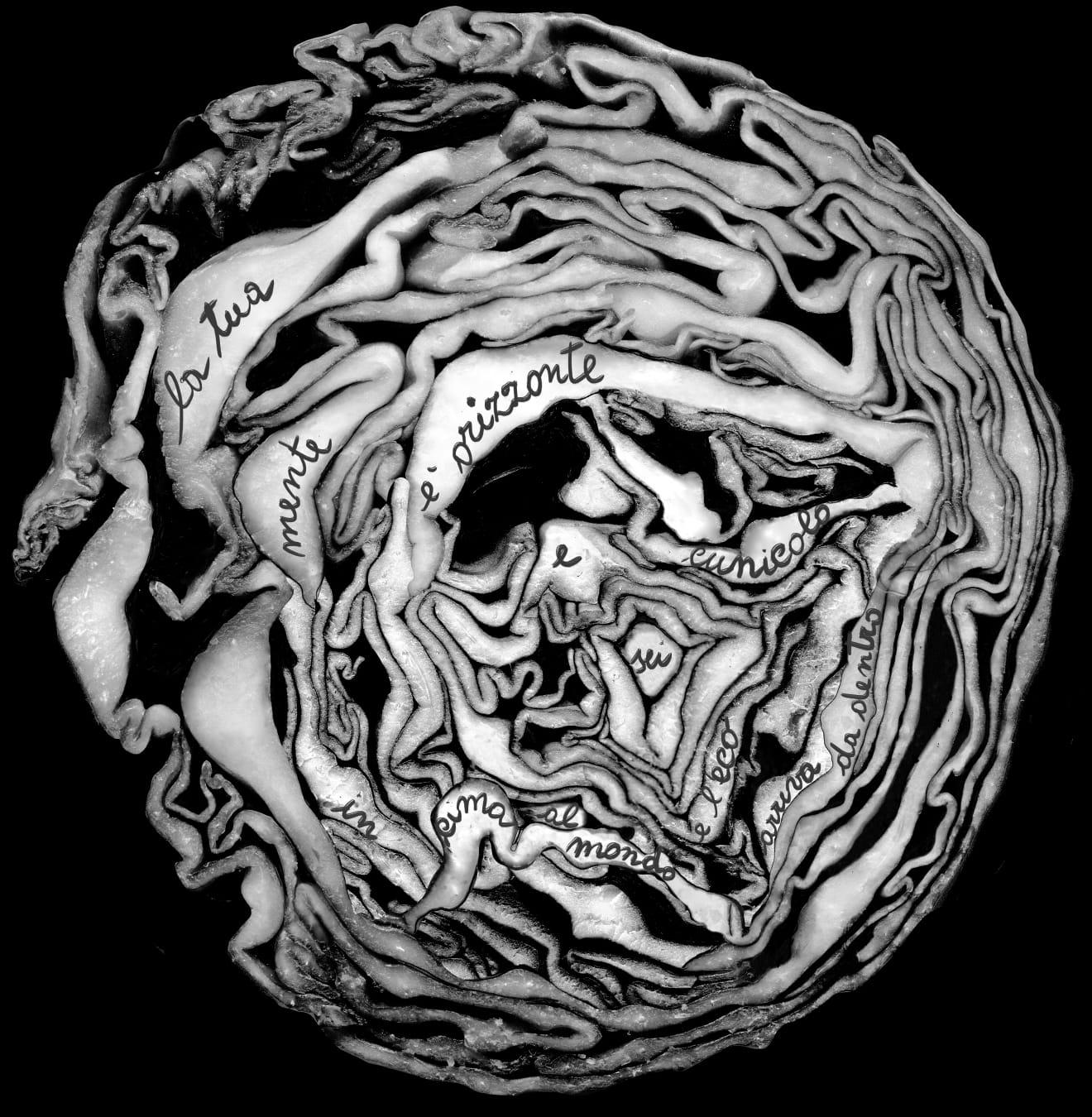Opera di Silvia Farina